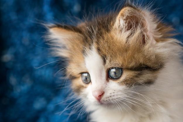 Nettes kätzchen schaut mit erstaunen auf blau