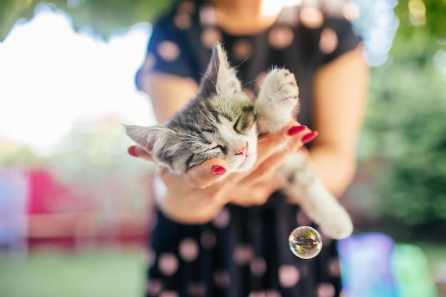 Nettes kätzchen schläft auf den händen der frau