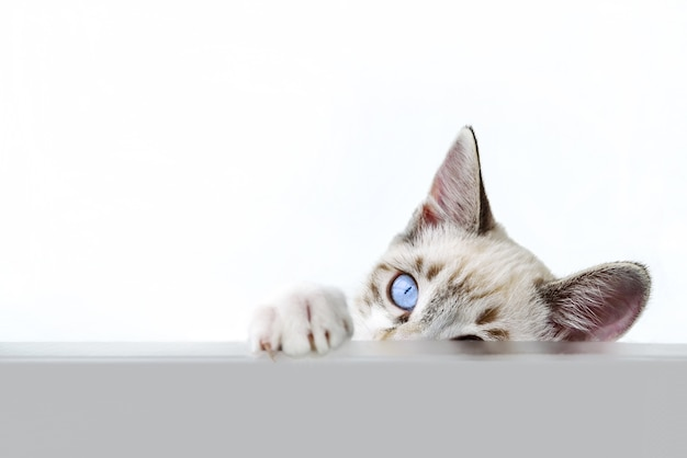 Nettes kätzchen über weiß