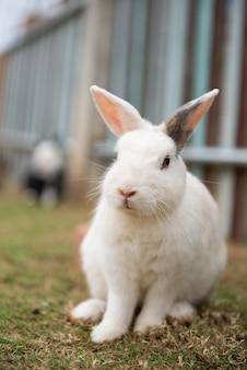 Nettes kaninchen auf dem bauernhof