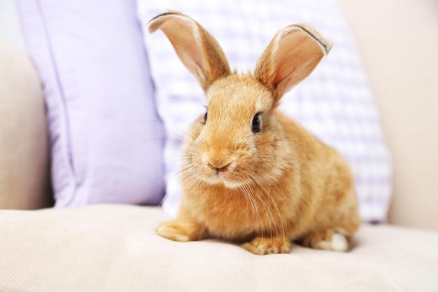 Nettes kaninchen auf sofa, nahaufnahme