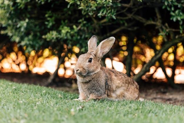 Nettes kaninchen, das auf grünem gras im park sitzt