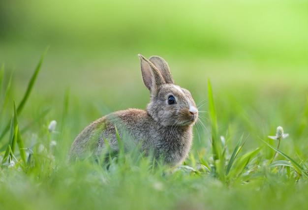 Nettes kaninchen, das auf grünem wiese osterhase sitzt