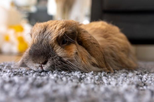 Nettes kaninchen, das auf teppich legt