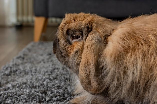 Nettes kaninchen, das auf teppich sitzt