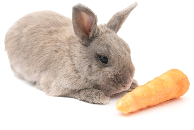 Nettes kaninchen grau liegt mit karotte isoliert auf weißem hintergrund