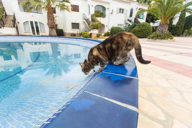 Nettes katzentrinkwasser vom schwimmbad