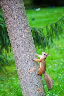 Nettes kleines eichhörnchen in der natur