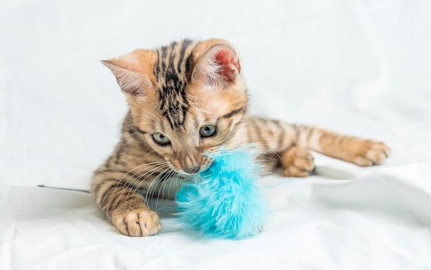 Nettes kleines gestreiftes bengal-kätzchen, das sitzt und mit einem blauen spielzeug spielt