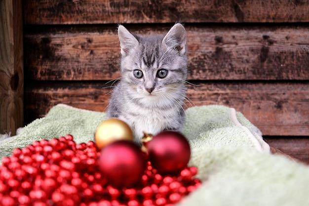 Nettes kleines graues kätzchenbaby, das hinter roten und goldenen weihnachtskugeln sitzt