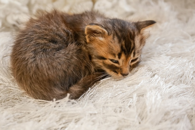 Nettes kleines kätzchen, das auf pelzigem teppich zu hause schläft Premium Fotos