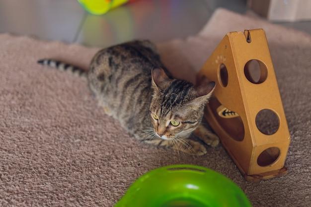 Nettes kleines kätzchen, das mit spielzeug spielt