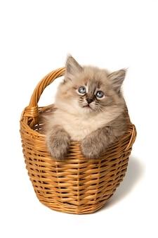 Nettes kleines kätzchen im weidenkorb auf weiß