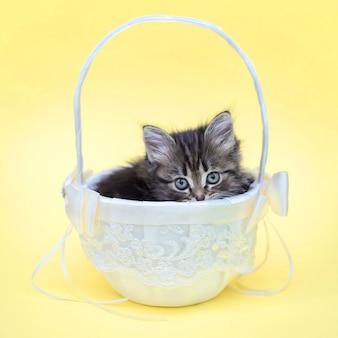 Nettes kleines kätzchen in einem weißen korb