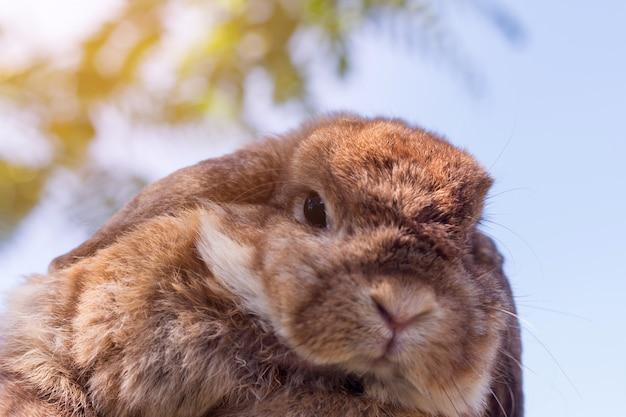 Nettes kleines kaninchen auf grünem gras am sonnenscheintag