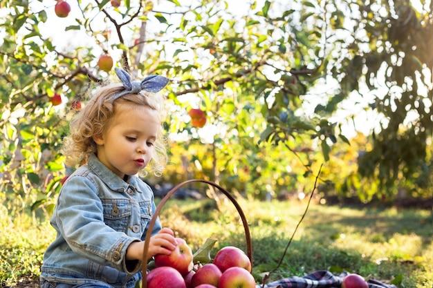 Nettes kleines mädchen, das im herbst reifen organischen roten apfel im apfelgarten mit einem korb voller äpfel isst. helles lockiges europäisches mädchen in einem jeansanzug mit familienpicknick auf einem bauernhof.