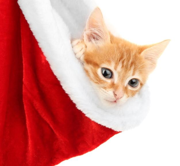 Nettes kleines rotes kätzchen in weihnachtsmütze isoliert auf weiß