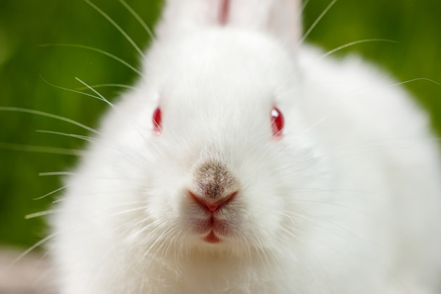 Nettes kleines weißes kaninchen auf einem grünen hintergrund