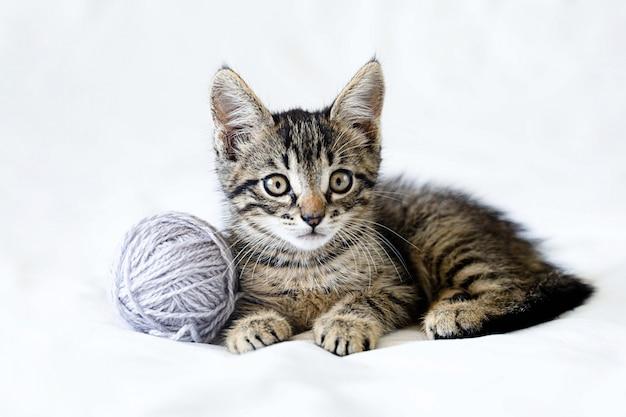 Nettes lustiges kleines kätzchen liegt auf einem weißen hintergrund und spielt mit einem wollknäuel.