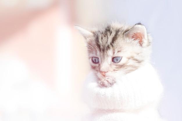 Nettes sanftes kätzchen auf einem licht