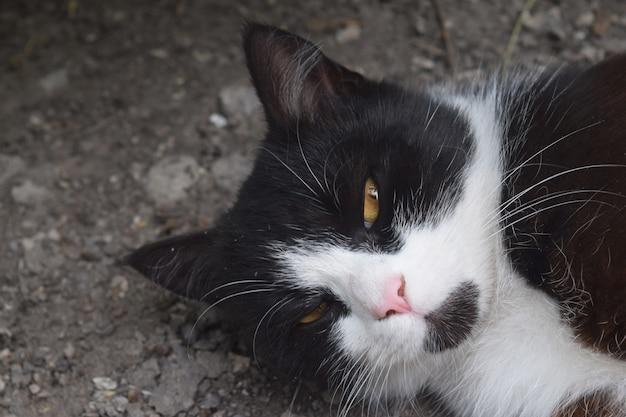 Nettes schwarzes kätzchen, das auf der straße schläft