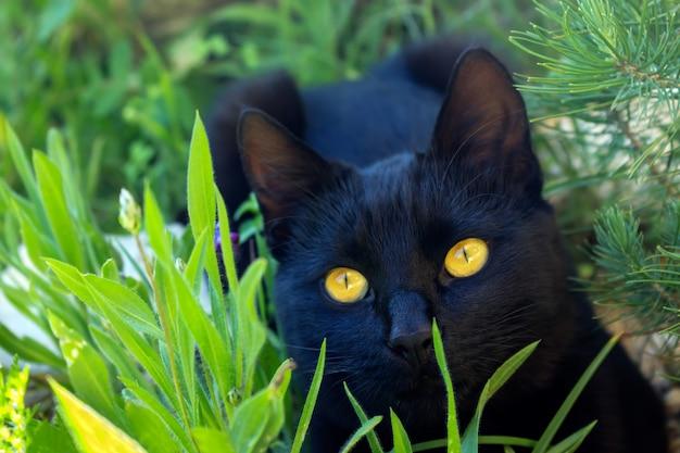 Nettes schwarzes kätzchen, das im gras sitzt. die katze hat leuchtend gelbe augen. tiefenschärfe.