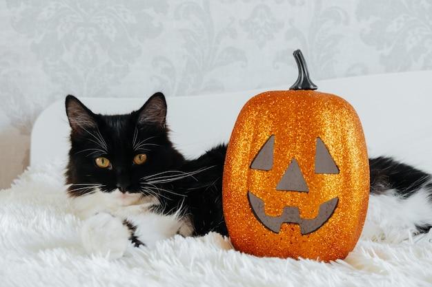 Nettes schwarzweiss-katzenporträt mit halloween-kürbis