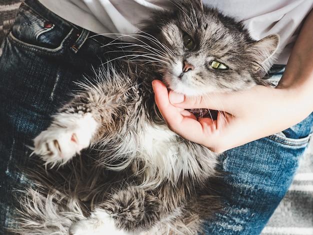 Nettes, süßes kätzchen, liegend auf weiblichen händen