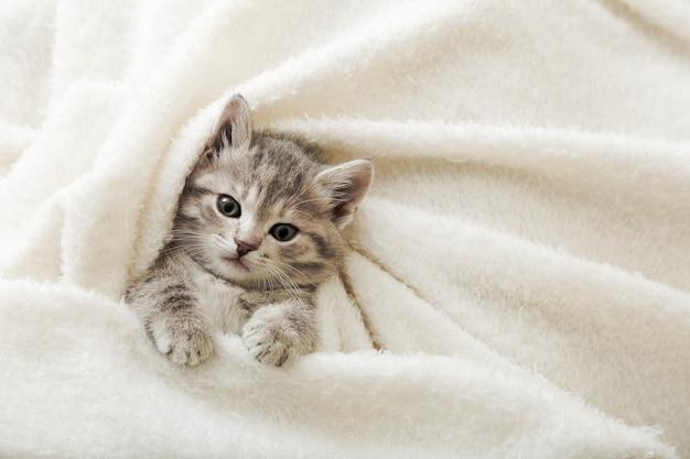 Nettes tabbykätzchen liegt auf weißer weicher decke. katzenruhe, die auf dem bett ein nickerchen macht. komfortables haustier, das im gemütlichen zuhause schläft. draufsicht mit kopienraum.