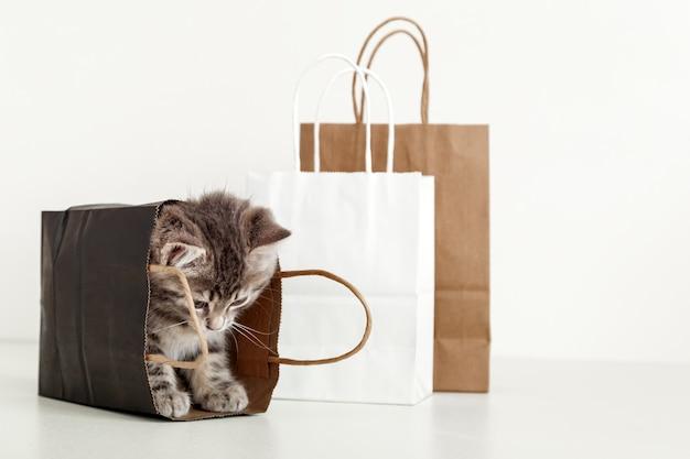 Nettes tabbykätzchen versteckt sich in papiereinkaufstasche. katze im lieferbeutel schaut nach unten. einkaufen verkauf kaufkonzept mit kopienraum auf weißem hintergrund.