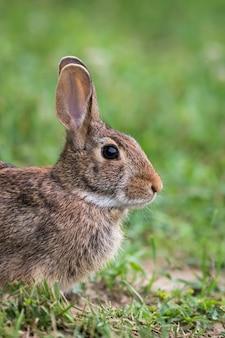 Nettes und entzückendes braunes kaninchen, das auf dem gras sitzt