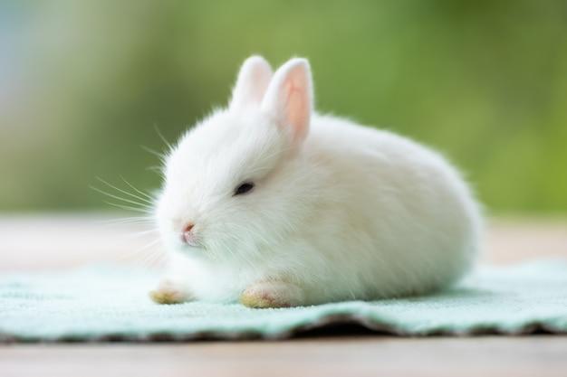 Nettes weißes babykaninchen, das auf stoff sitzt. freundschaft mit süßem osterhasen.