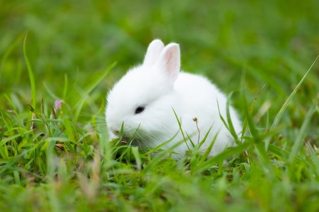 Nettes weißes babykaninchen im grünen gras der wiese freundschaft mit süßem osterhasen.