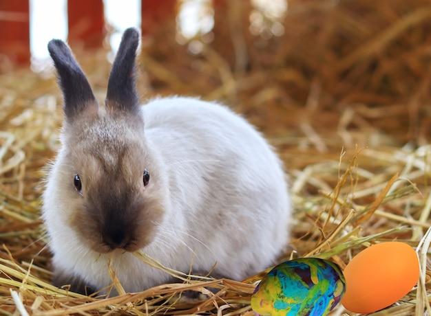 Nettes weißes braunes kaninchen auf dem gras mit farbigen ostereiern