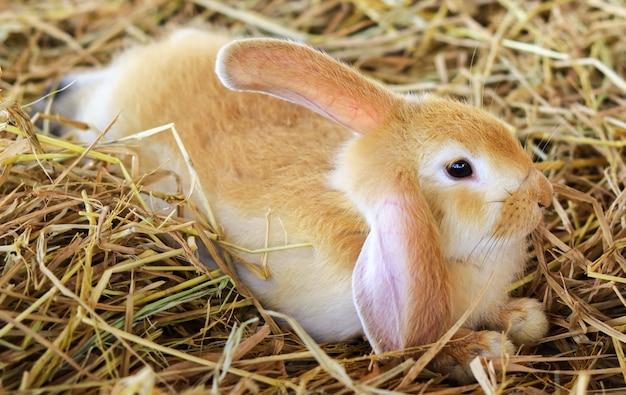 Nettes weißes braunes kaninchen auf dem strohhalm