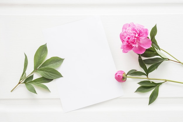 Nettes weißes papierblatt und pfingstrosenblumen.