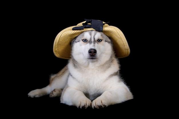 Nettes welpenporträt des sibirischen huskys im strohhut lokalisiert