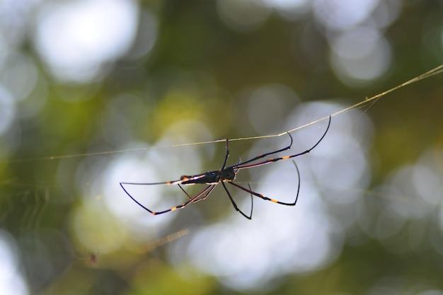Netz- und spinnenleben in der natur