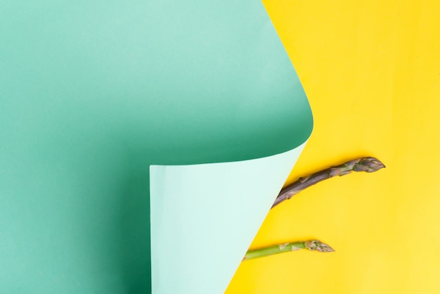 Neue knospe des natürlichen organischen spargelgemüses auf einem gebogenen hintergrund des duotone-papiers. draufsicht.