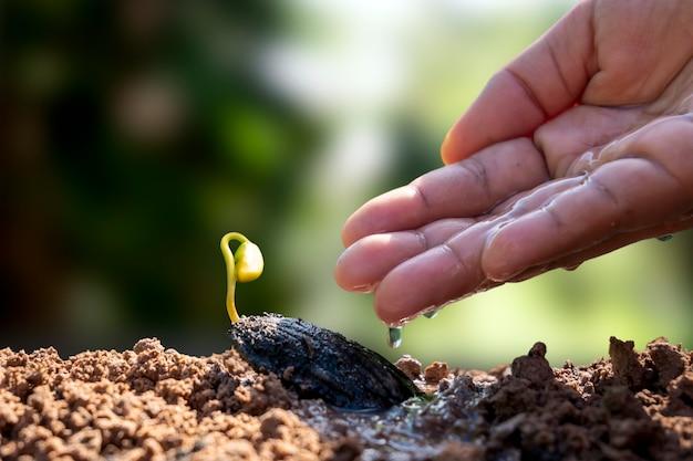 Neue lebende pflanzen wachsen aus samen auf fruchtbarem boden und bauern bewässern bäume
