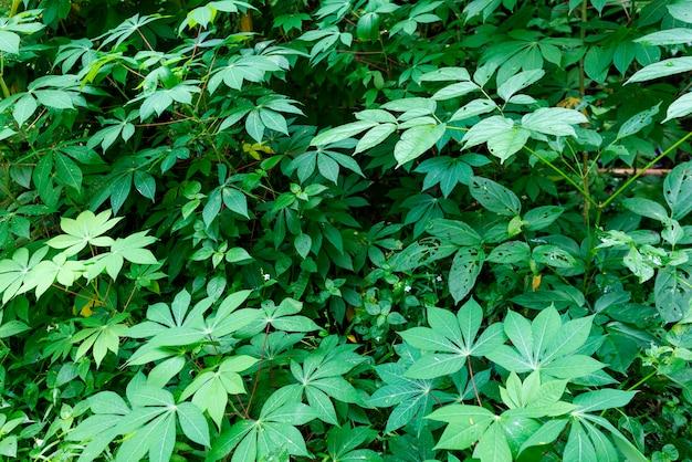 Neues grün lässt beschaffenheit für naturhintergrund