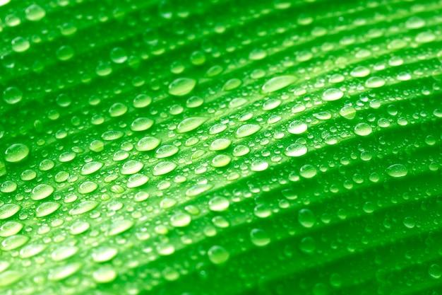 Neues grün lässt hintergrund bananenblätter