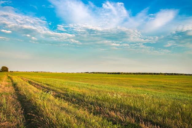 Neues grünes feld und blauer himmel im frühjahr