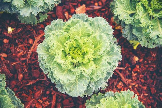 Neues lebenskonzept, pflanzensaat in der natur