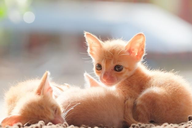 Neugeborene katzen