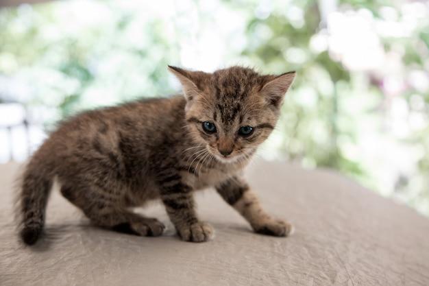 Neugeborene kitty cat potrait auf der bühne