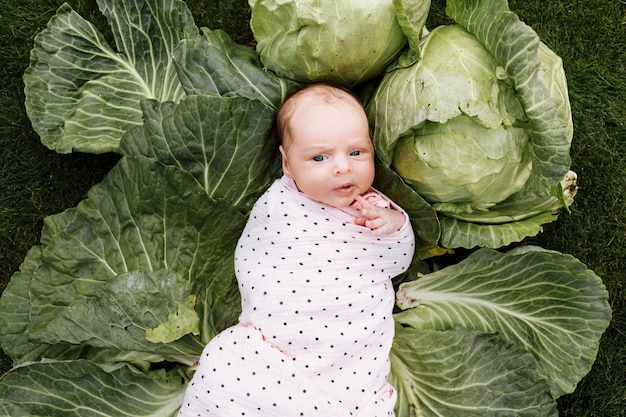Neugeborenes mädchen 3 monate liegt in einem grünkohl.