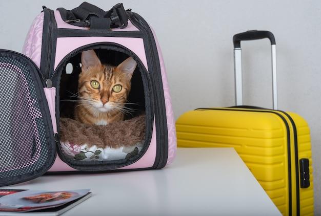 Neugierig schaut eine bengalkatze aus einem gepolsterten gepäckträger neben einem koffer.