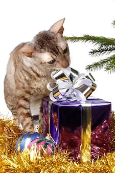 Neugierige katze packt weihnachtsgeschenk aus