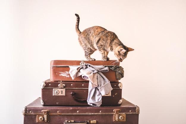 Neugierige katze sitzt auf weinlesekoffern gegen den hintergrund einer hellen wand. rustikaler retro art-exemplarplatz